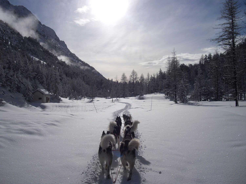chiens-traineaux-nevache