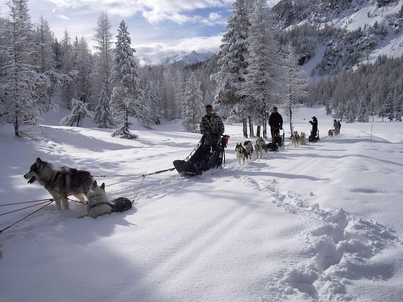 nevache-chiens-traineaux-hiver
